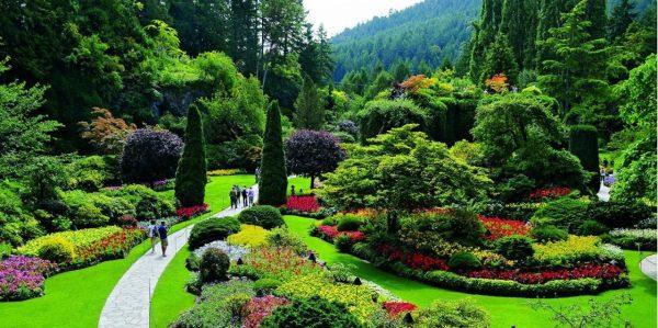 تنسيق حدائق حي البلد